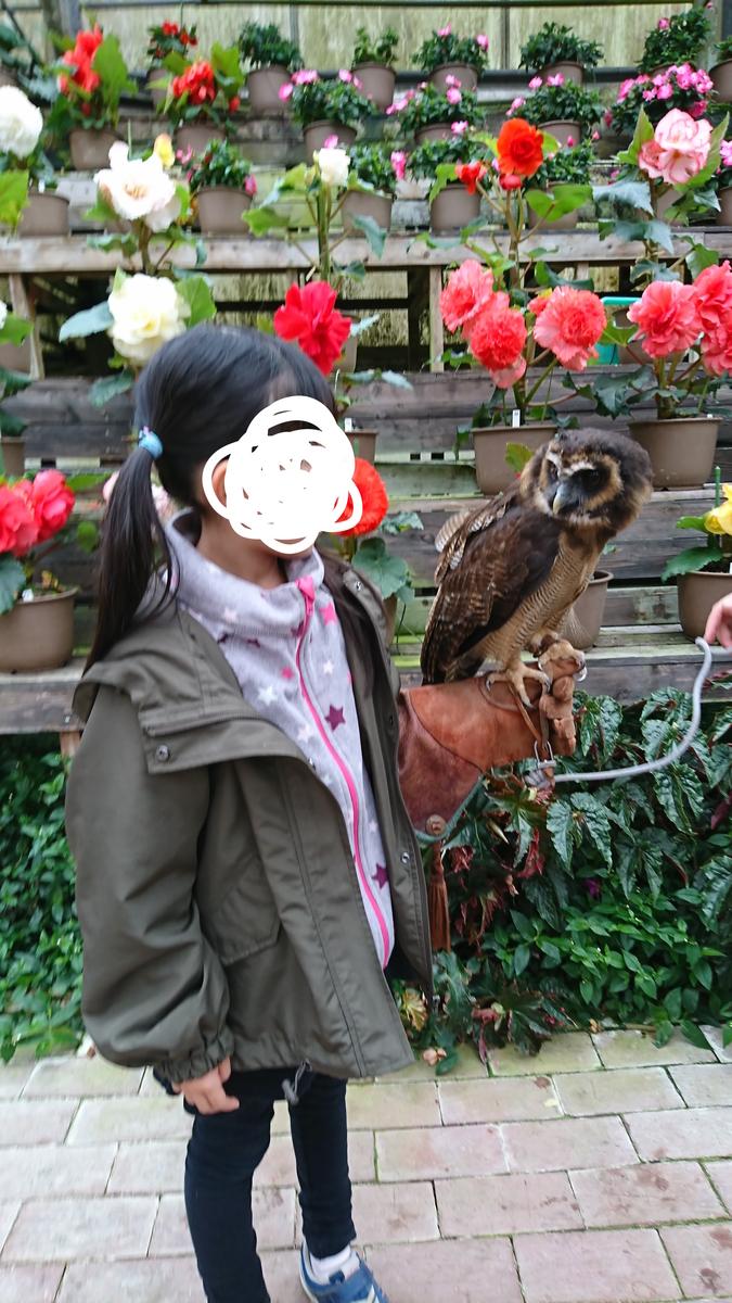 f:id:akiiroakiiro:20190529131342j:plain