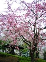 f:id:akilanoikinuki:20080402150254j:image