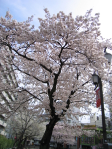f:id:akilanoikinuki:20090405164915j:image:left