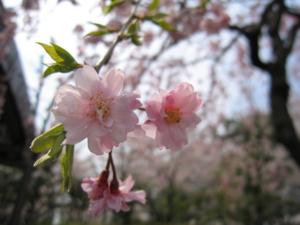 f:id:akilanoikinuki:20090408124344j:image:left