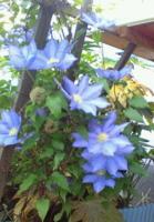 f:id:akilanoikinuki:20100507205221j:image:left