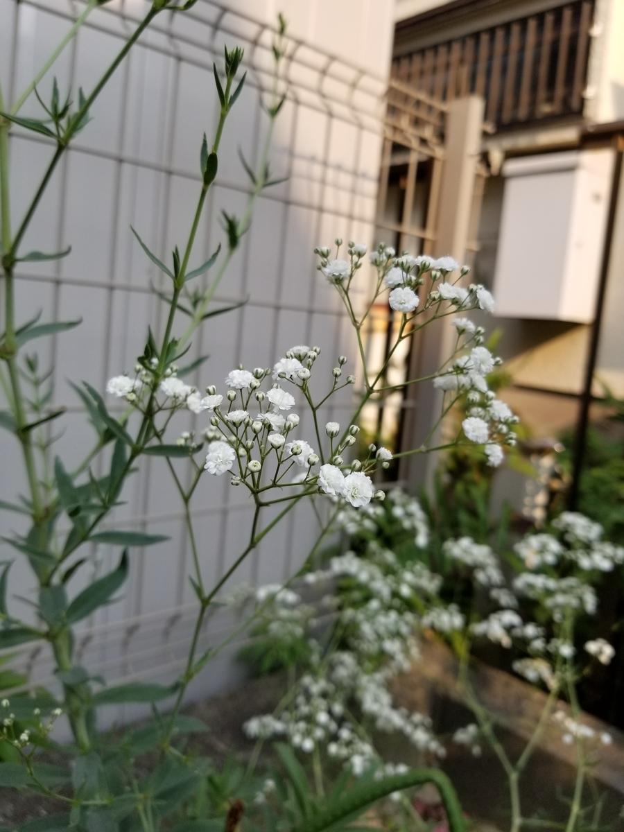 f:id:akinisakusakura:20210114103211j:plain
