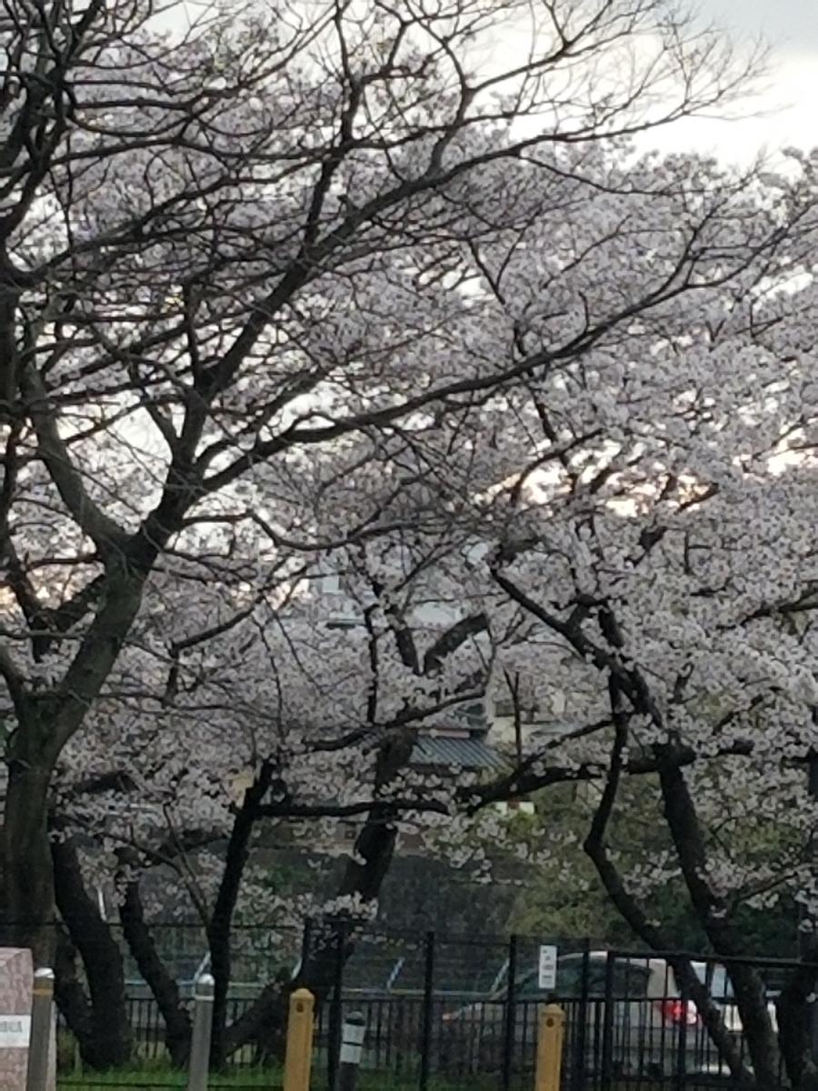 f:id:akinisakusakura:20210324174831j:plain