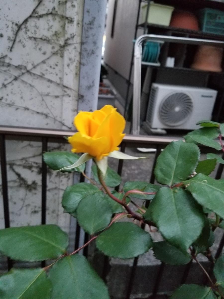 f:id:akinisakusakura:20210404071321j:plain