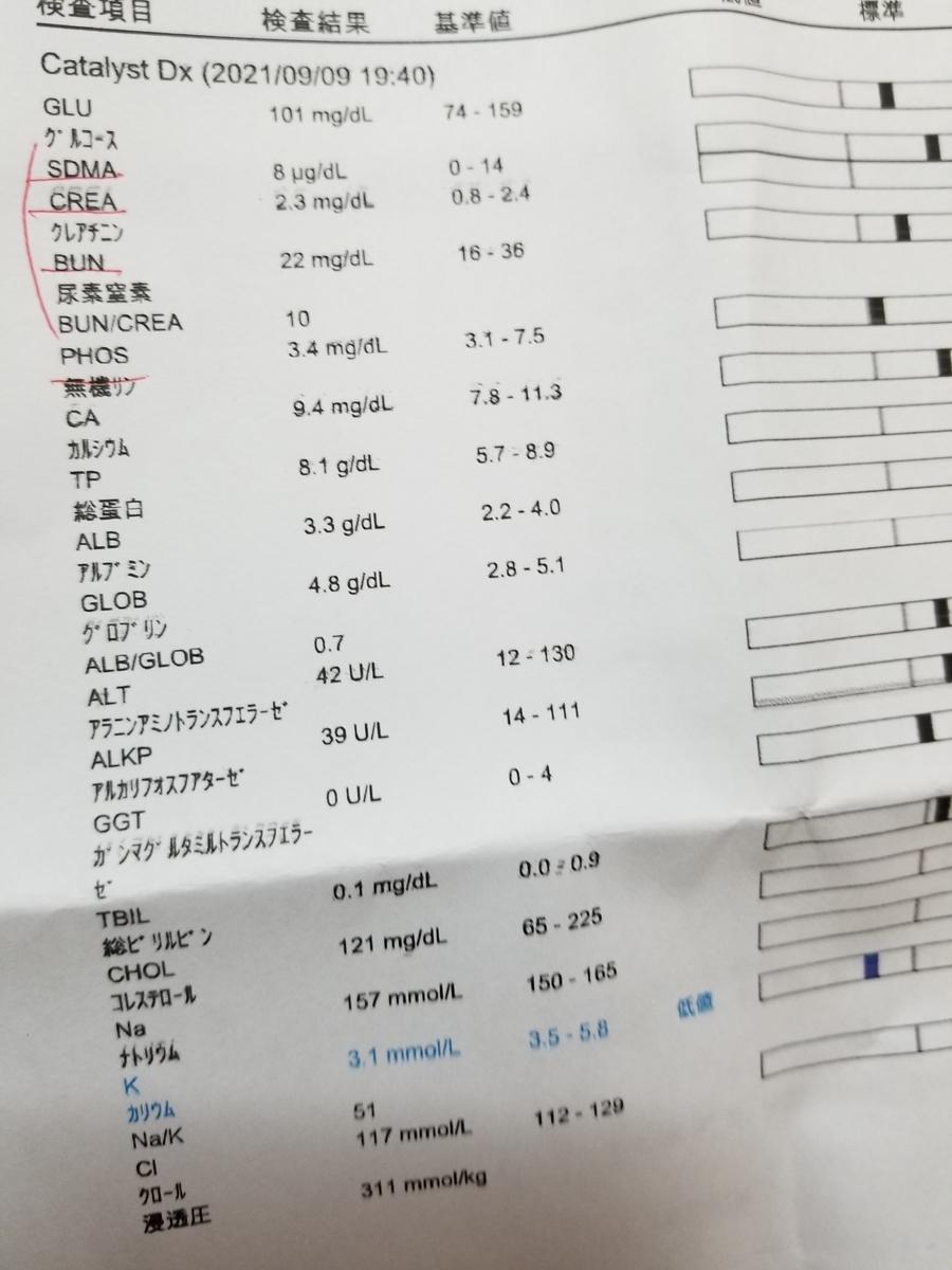 f:id:akinisakusakura:20210909205805j:plain