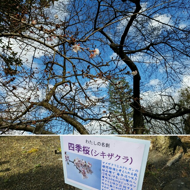 f:id:akinosakura:20170104133618j:image