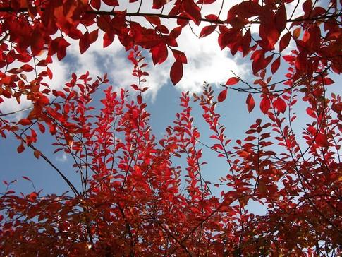 f:id:akinosato:20090111185912j:image