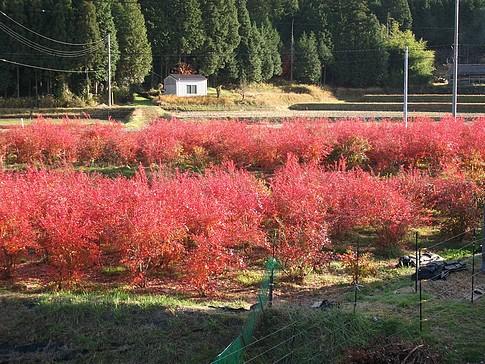 f:id:akinosato:20090111200319j:image