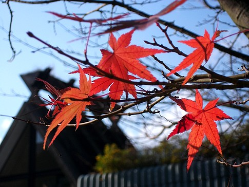 f:id:akinosato:20090116190012j:image