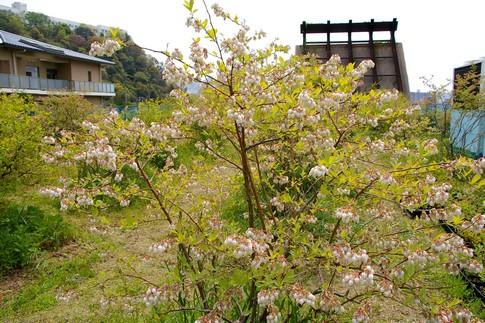 f:id:akinosato:20110426130402j:image
