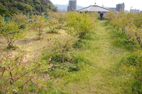 f:id:akinosato:20110426145615j:image