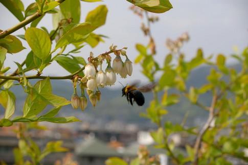 f:id:akinosato:20110426150224j:image