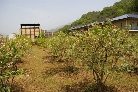 f:id:akinosato:20110502120911j:image