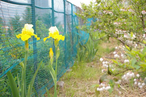 f:id:akinosato:20110503092053j:image