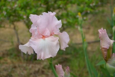 f:id:akinosato:20110506171028j:image
