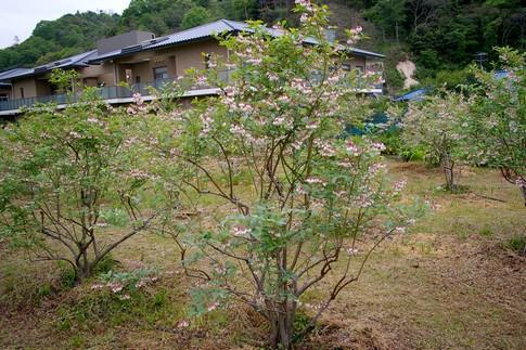 f:id:akinosato:20110506171643j:image