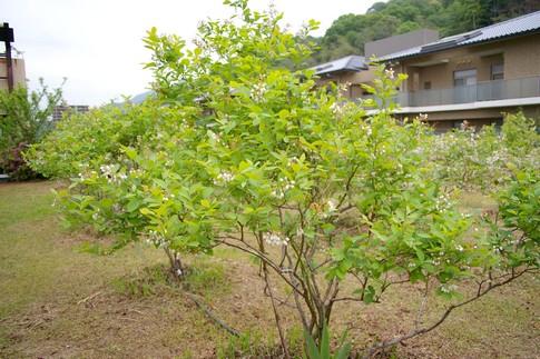 f:id:akinosato:20110506171736j:image