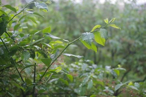 f:id:akinosato:20110512135119j:image