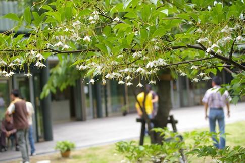 f:id:akinosato:20110525125315j:image
