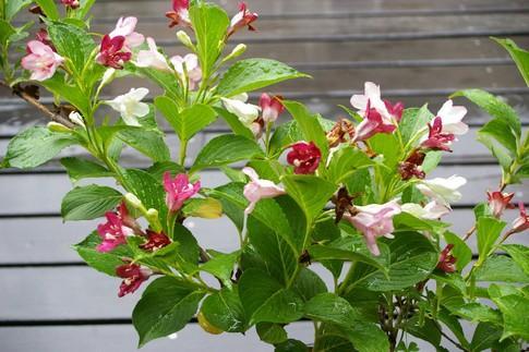 f:id:akinosato:20110526144520j:image