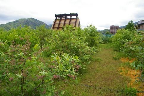 f:id:akinosato:20110530084054j:image