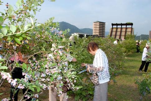 f:id:akinosato:20110730162529j:image