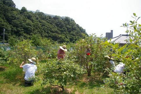 f:id:akinosato:20110809131134j:image