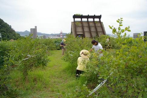 f:id:akinosato:20110818103647j:image