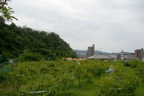 f:id:akinosato:20110818103854j:image