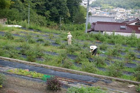 f:id:akinosato:20110824111712j:image