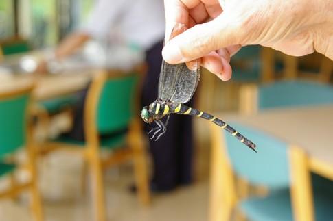 f:id:akinosato:20110909113245j:image