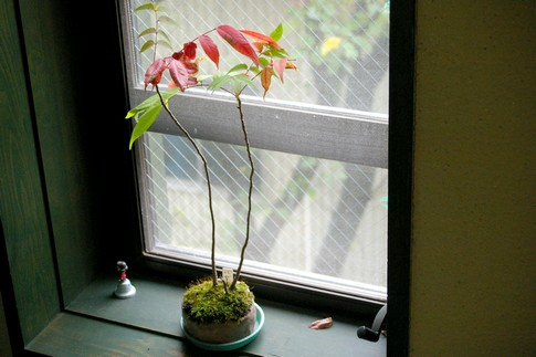 f:id:akinosato:20111005110318j:image