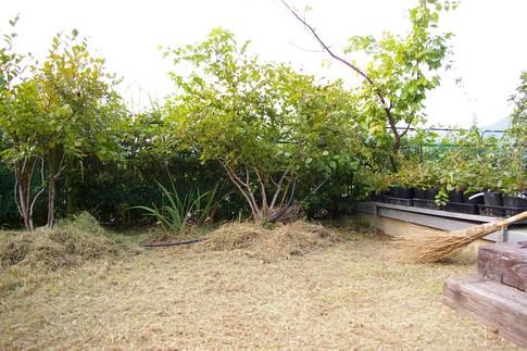 f:id:akinosato:20111013151018j:image