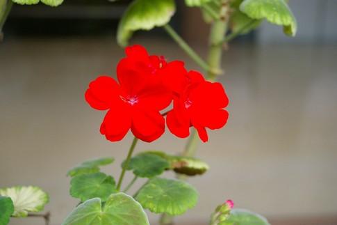 f:id:akinosato:20111014124306j:image