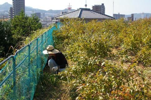 f:id:akinosato:20111020110754j:image