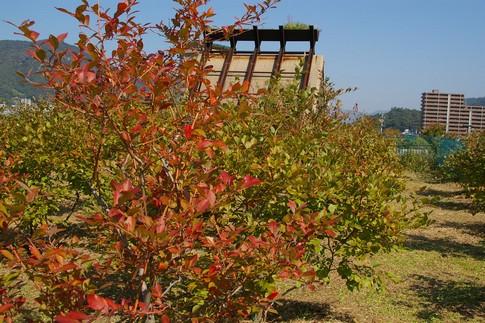 f:id:akinosato:20111020111002j:image