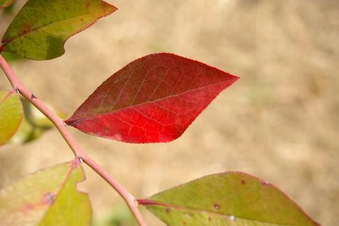 f:id:akinosato:20111020111058j:image
