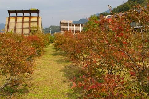 f:id:akinosato:20111028131435j:image