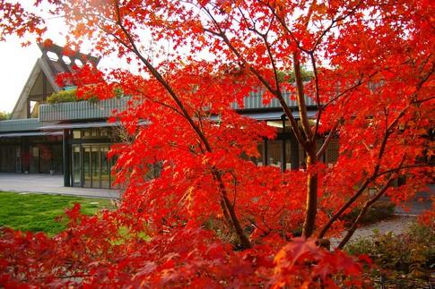 f:id:akinosato:20111129162304j:image