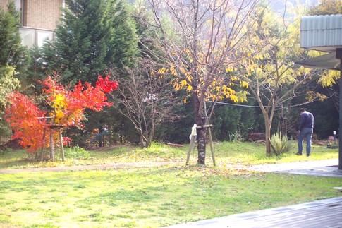 f:id:akinosato:20111208140548j:image