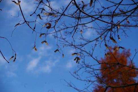 f:id:akinosato:20111216135122j:image