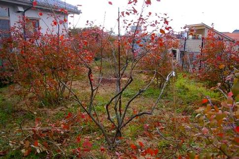 f:id:akinosato:20120124211240j:image
