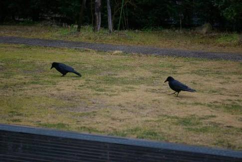 f:id:akinosato:20120213194415j:image