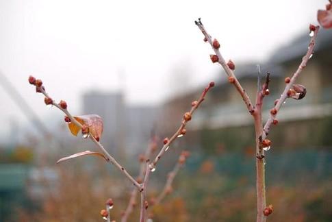 f:id:akinosato:20120302182805j:image
