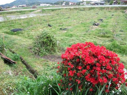 f:id:akinosato:20120505155415j:image