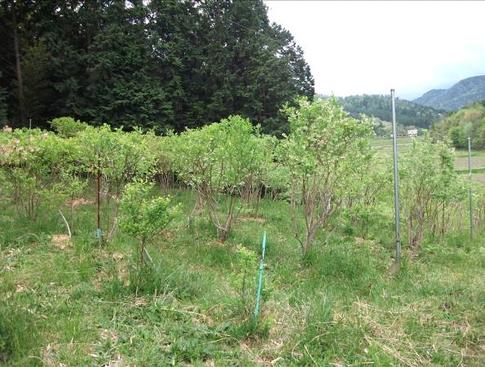 f:id:akinosato:20120505155417j:image