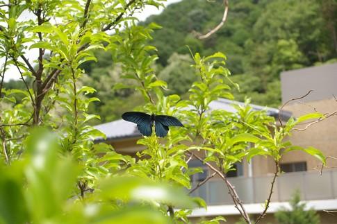 f:id:akinosato:20120511131115j:image