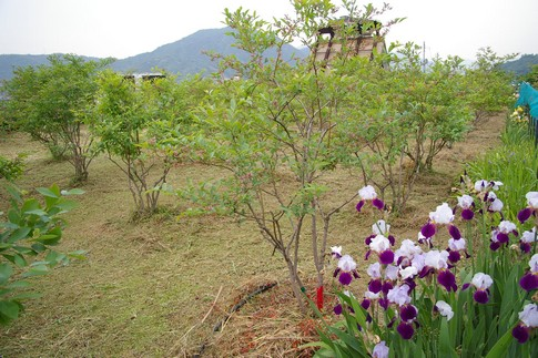 f:id:akinosato:20120514153732j:image