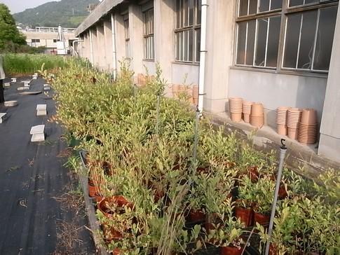f:id:akinosato:20120530174852j:image