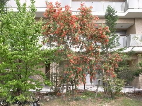 f:id:akinosato:20120601154027j:image